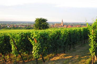Wines Tours & Tastings